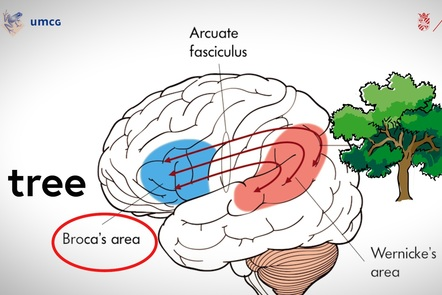Production of language between Wernicke's and Broca's area