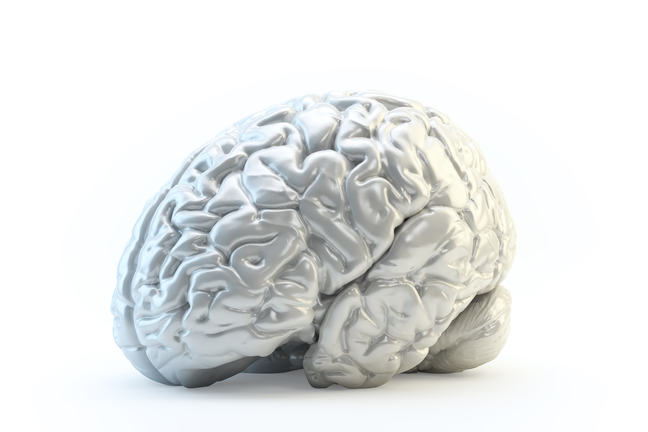Silver, metallic looking illustration of a brain