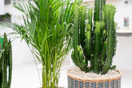 Grouping of potted house plants
