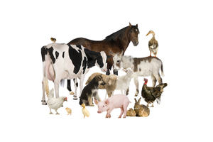 Image showing a collection of farmyard animals