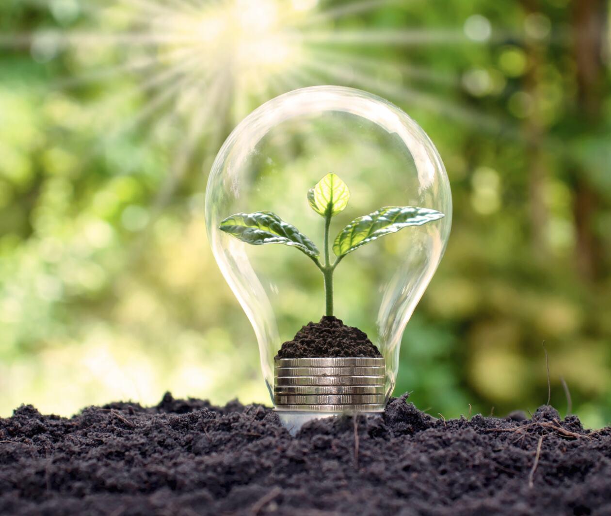 Renewable Energy: Achieving Sustainability through Bioenergy