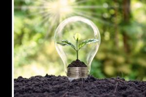 Visual representation of green energy. A plant growing inside a lightbulb, on a bed of soil.