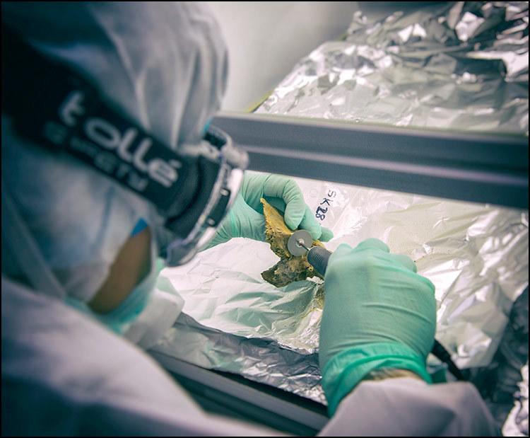 A scientist cuts a bone for DNA analysis