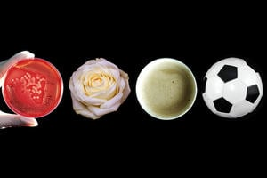 A petri dish, a flower, a cup of coffee and a football