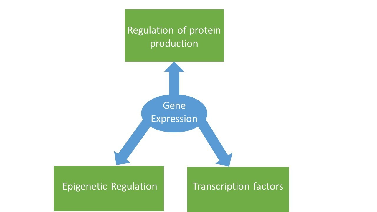 Diagram of gene expression