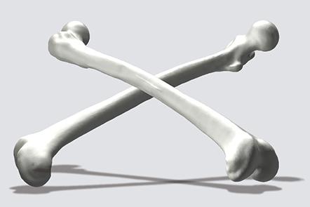 3d model of a femur