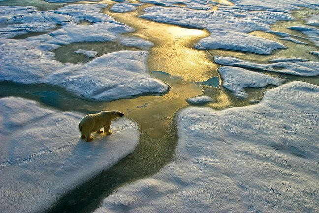 Polar bear on melting sea-ice