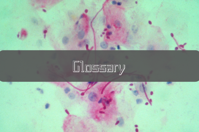 Candida albicans (Pathogenesis)