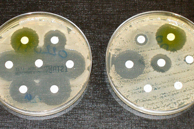 Two petrie dishes with bacterial samples depicting bacterial multiplication