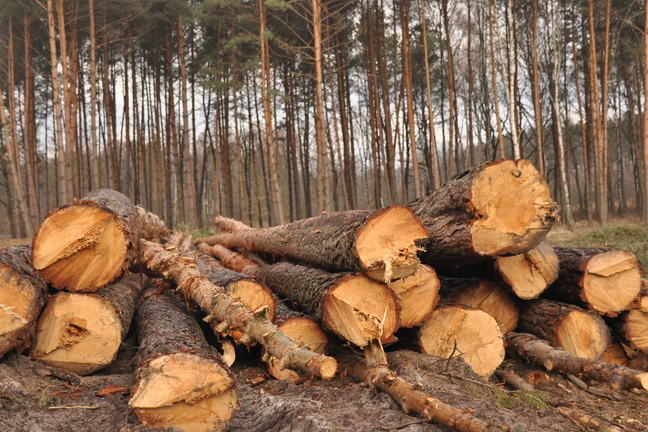 Forestry clearance and storage timber.