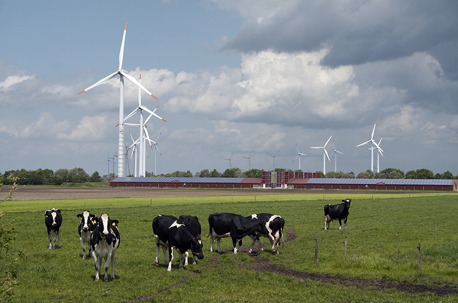 Wind turbines behind a modern farm with solar panels Group of wind turbines behind a modern farm with solar panels on the roofs, group of cows in the foreground; northern Germany.