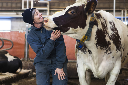 A veterinarian and a healthy cow. Photo SLU