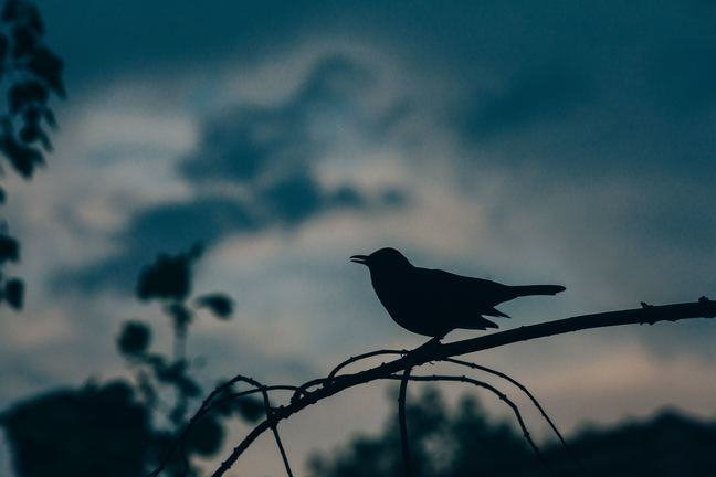 Silhouette of a bird on a branch