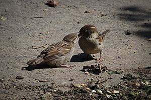 Photo of some sparrows