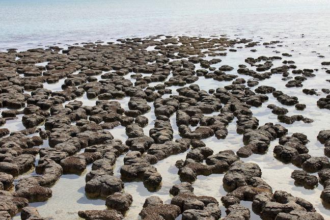 Stromatolites at Red Caps Australia