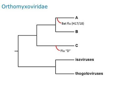 a tree of the orthomyxoviridae - the family to which influenza belongs