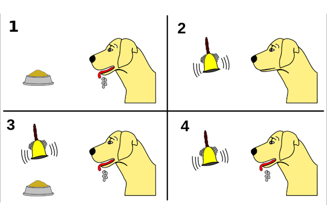 Diagram of Ivan Pavlov's conditioning experiments with dogs - four panels showing a dog; a food bowl and a bell