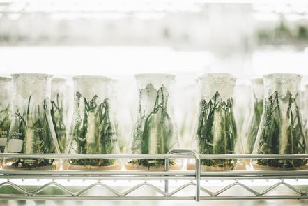 Beakers containing green plants