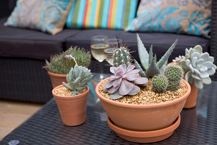 Grouping of indoor pots containing a mix of cacti and succulent plants