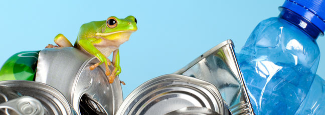frog on pile of rubbish