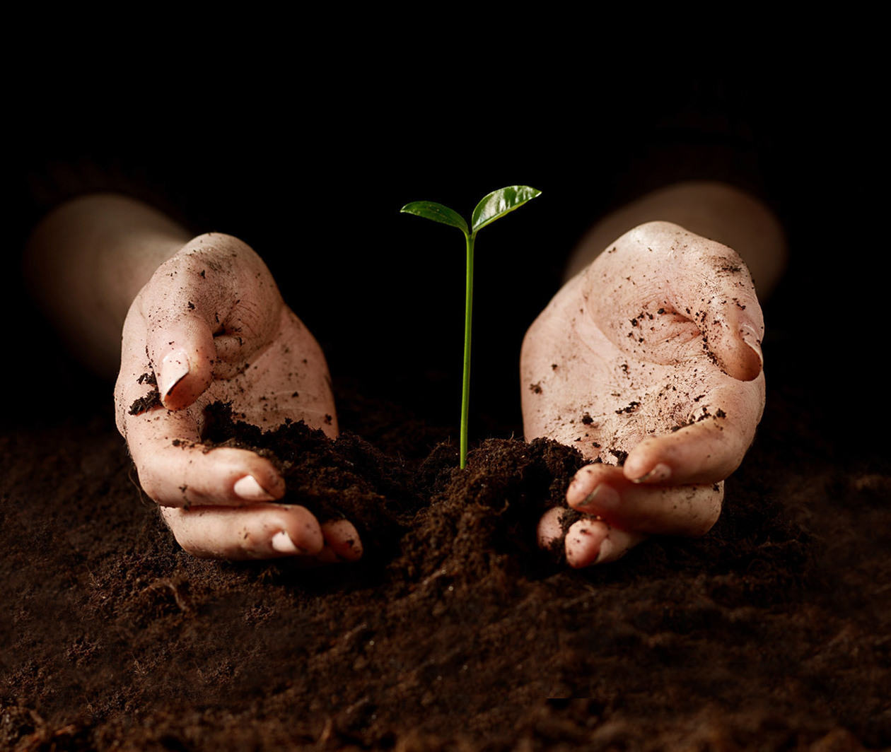 Soils: Introducing the World Beneath Our Feet