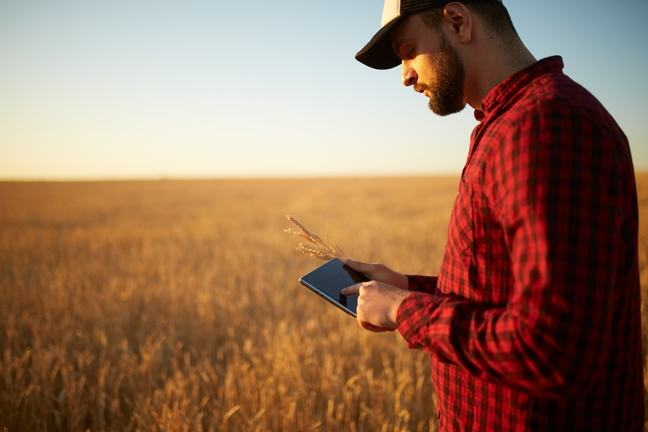 Male agronomist using a tablet in wheat field