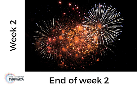 Photo of fireworks, with text 'Week 2 - end of week 2'