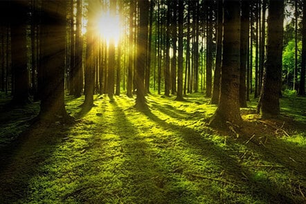 Image shows the sun beaming though the trees.