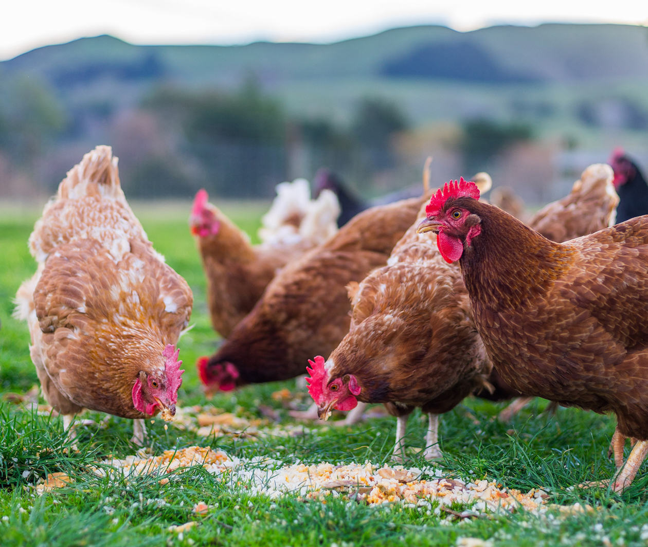 Animal Feed Production: Feed Quality