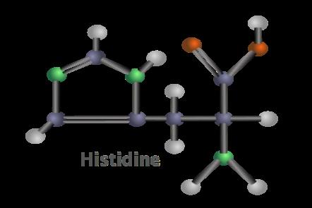 The metabolite histidine