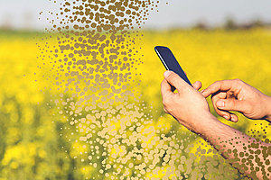 phone in front of canola plants