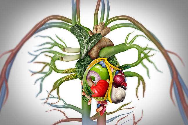 Body system from food.