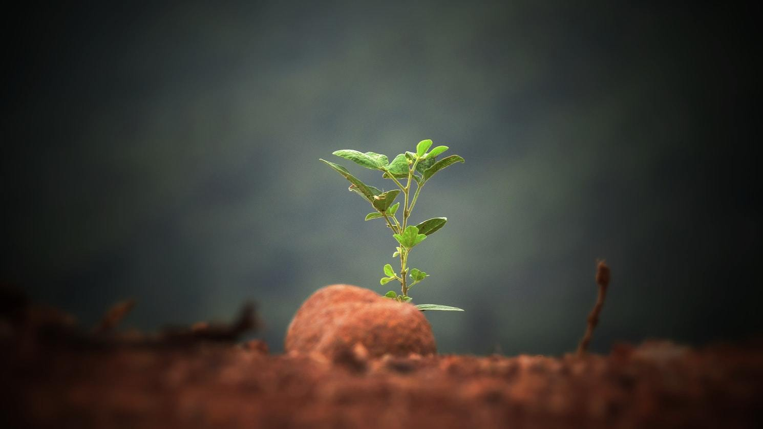 Solitary sapling growing from soil