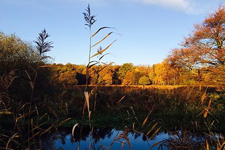 UEA Broad in Autumn