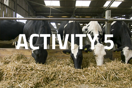 Four cows in a row eating straw. 'Activity 5' written over the top.