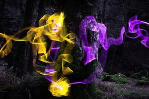 Light weaving between trees.