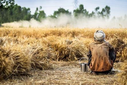 Farmer in his wheat field