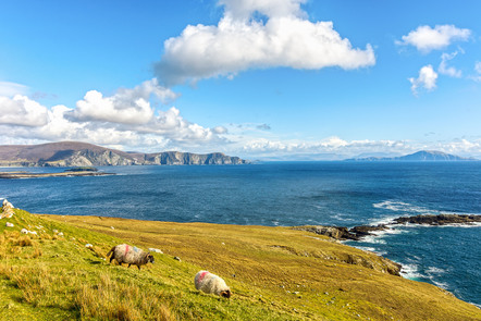 A pair of sheep at the edge of the Wild Atlantic Coast in the West of Ireland.