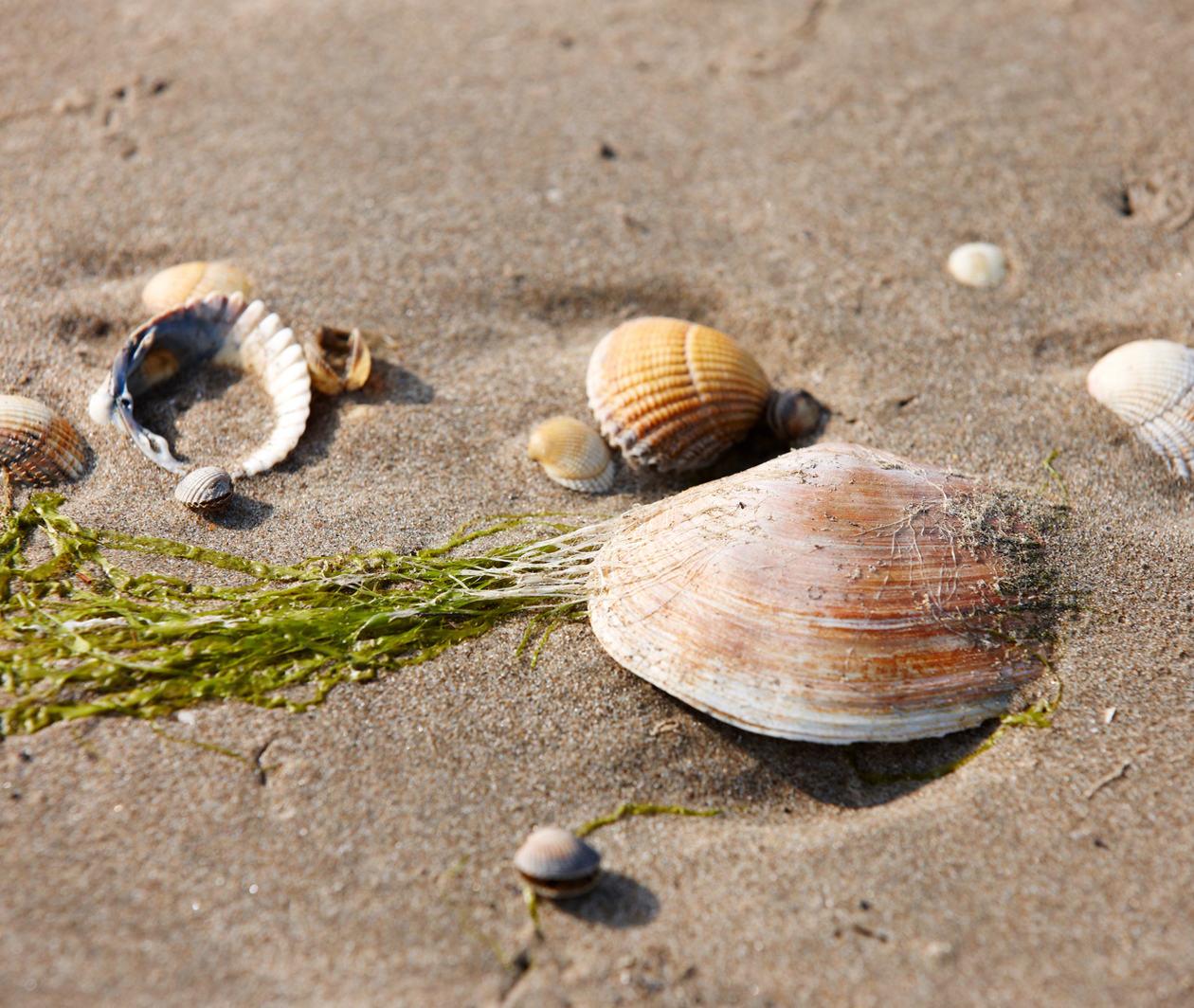 Beneath the Blue: The Importance of Marine Sediments