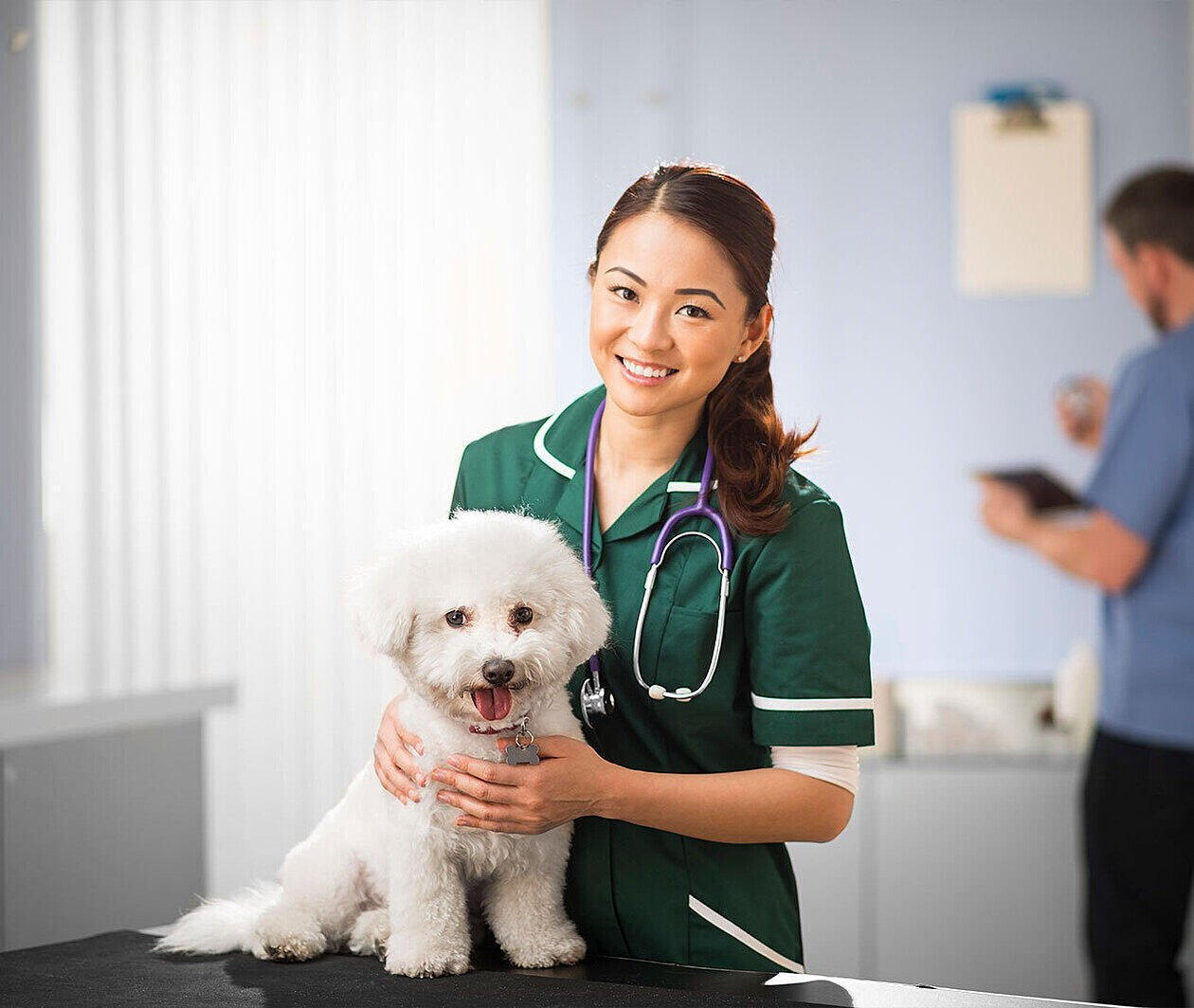Virtual Work Experience and Exploring the Veterinary Profession