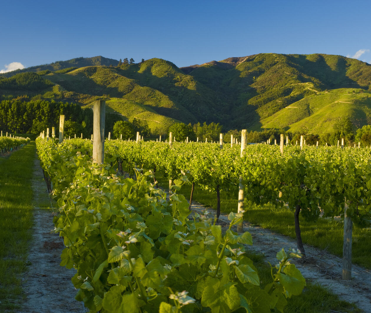 Sustainability in the New Zealand Wine Industry