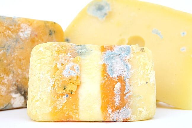 Blocks of cheese with blue mould on it
