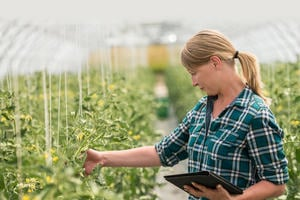 A farmer inspects crops in a glasshouse using a tablet and mobile app to provide on site information.