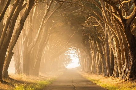Bare trees growing in an arc in a forest leading to light and mist