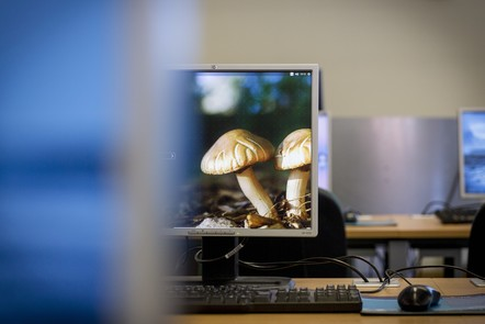 Set of computer screens in a row, one of them displaying pair of mushrooms