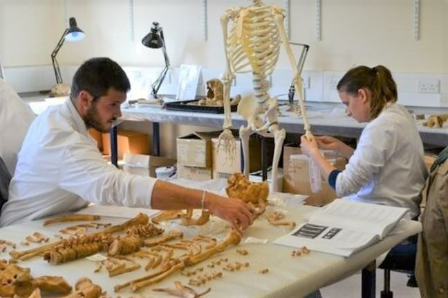 Two osteologists examine a skeleton laid out on a work table