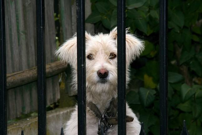 A dog behind bars