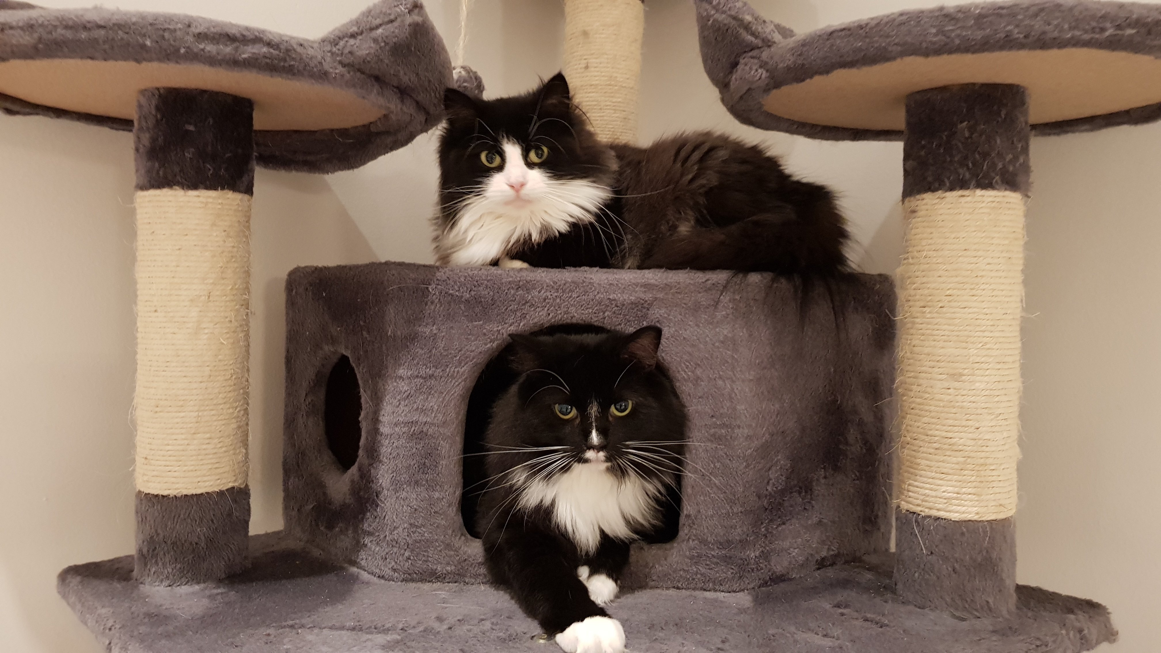 Black and white cats relaxing