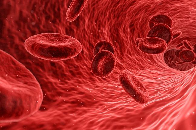 close up of red blood cells