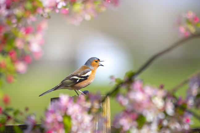 Small bird on fence in spring
